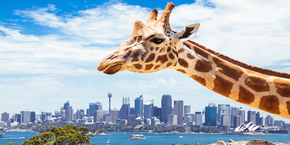 toronga-zoo.jpg